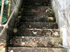 Pressure washing and the application of a solid stain gave these steps gave them new life.